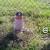 Eladó építési telek Váchartyánban. 7.3 M Ft - 35922 - Kép2