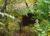 Nagymarosi faházas nyaraló eladó. 2.6 M Ft - 38102 - Kép5