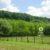 Eladó mezőgazdasági tanya Pusztaberkin. 25.9 M Ft - 38905 - Kép5
